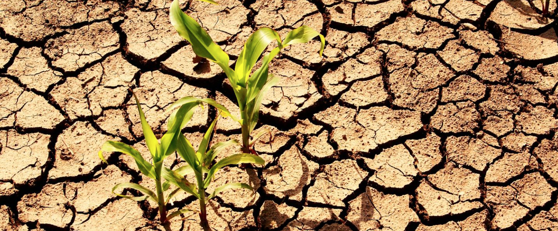 ECA plays leading role in Africa's fight against climate change